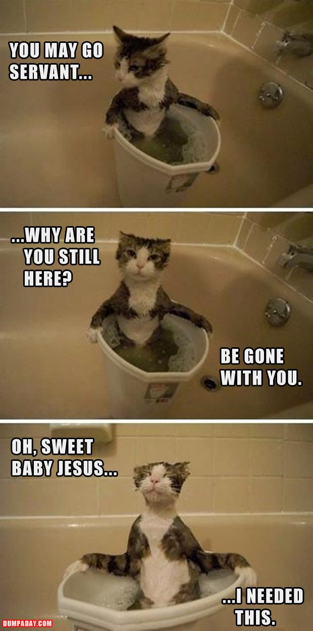 funny pictures, cat taking a bath