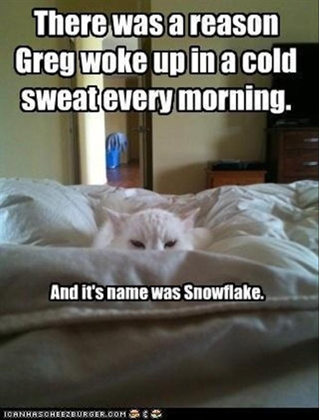 funny pictures, cat wakes you up