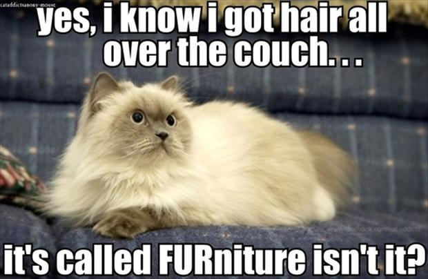 funny pictures, couch with cat fur on it