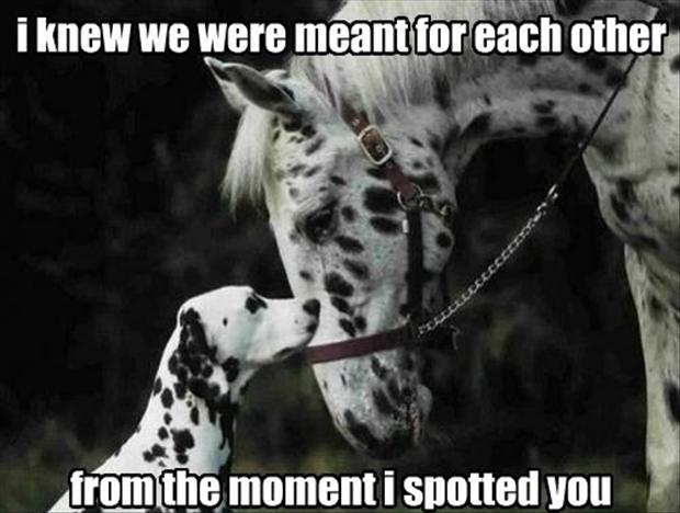 funny pictures, dalmations
