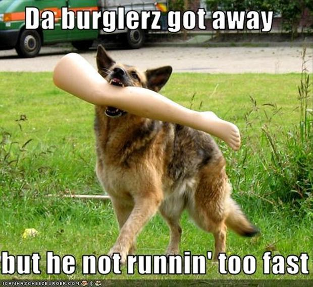 funny pictures dog eats leg