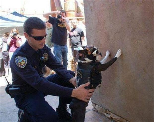 funny pictures, dog gets arrested