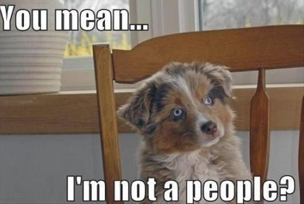 funny pictures dog is people