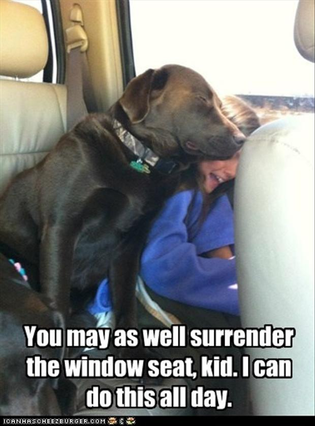 funny pictures, dog wants the window seat