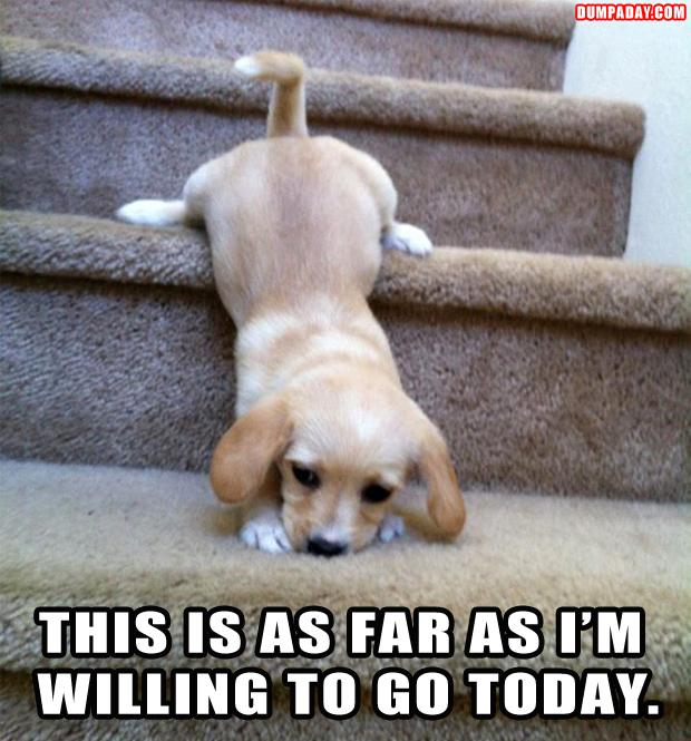 funny pictures, dog