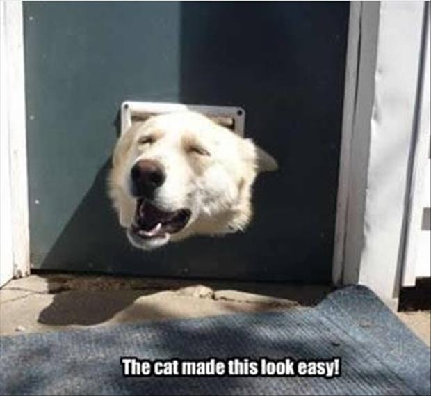 funny pictures, doggy door