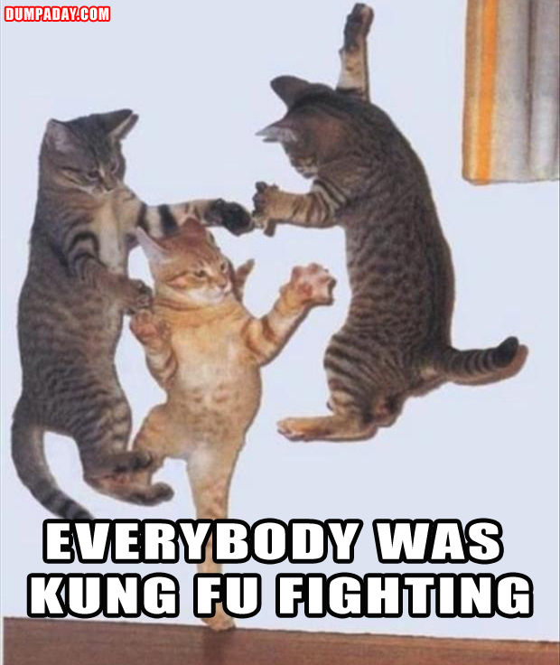 funny pictures, kung fu fighting cats