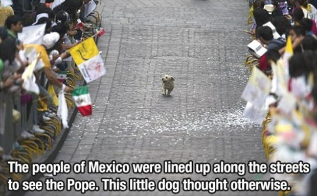 funny pictures of a dog in a parade