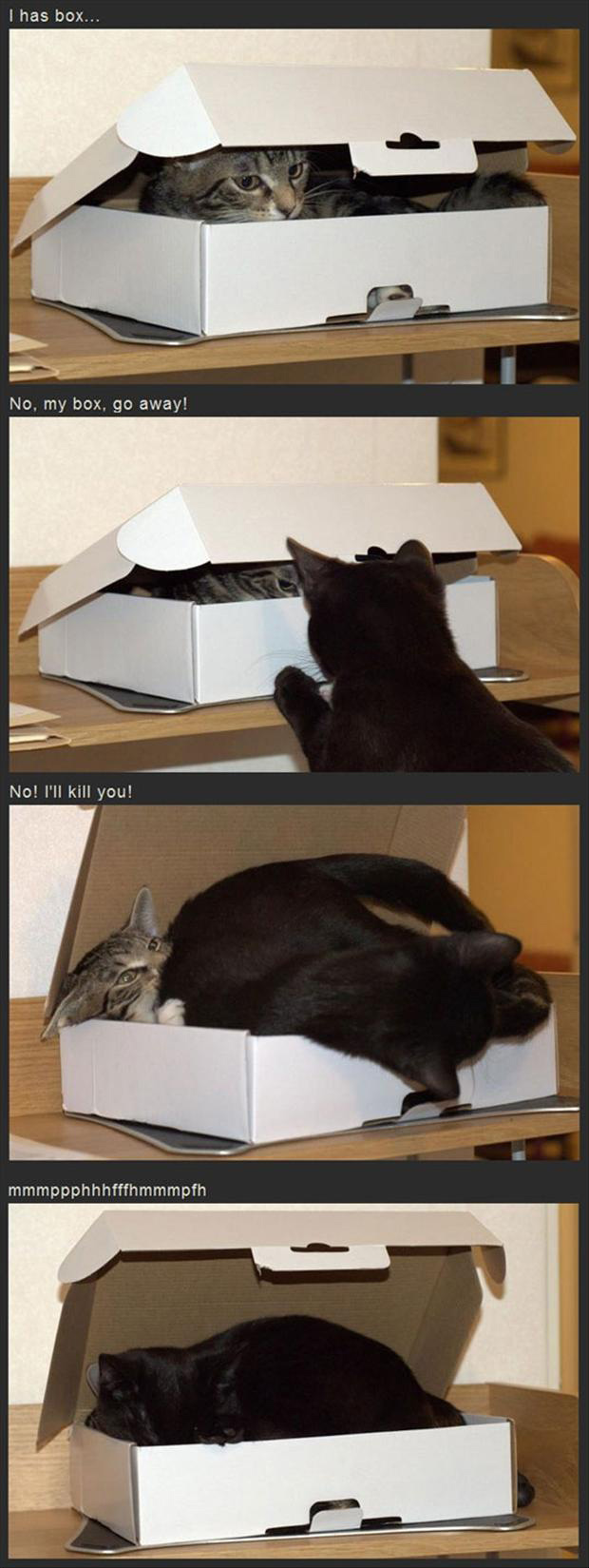 funny pictures of two cats in one box