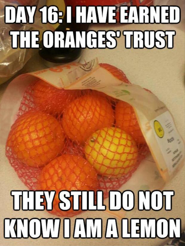 funny pictures, oranges