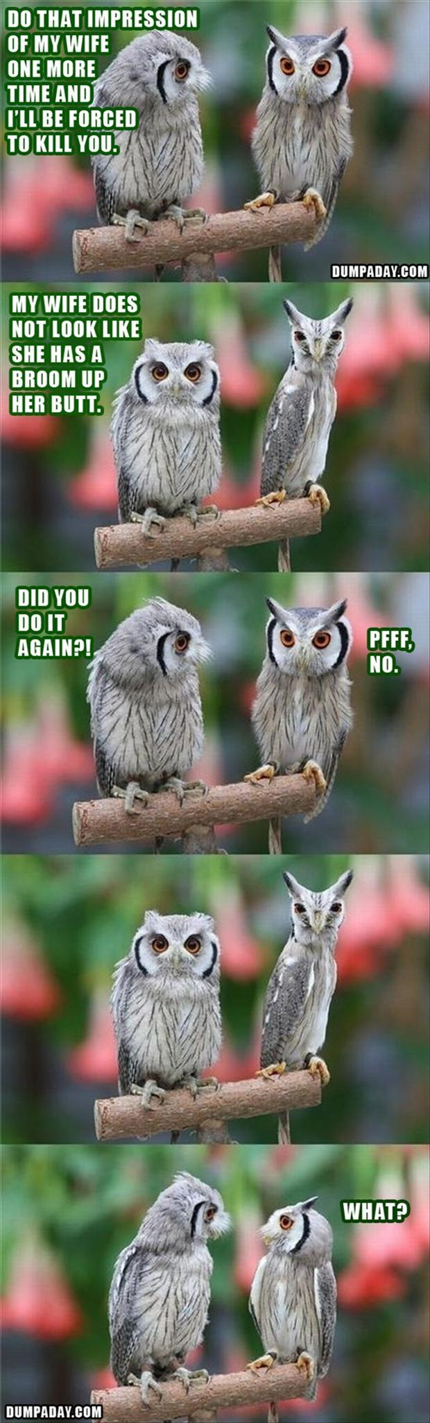 funny pictures, owls