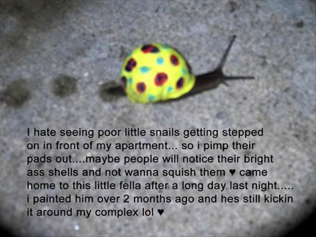funny pictures, snails