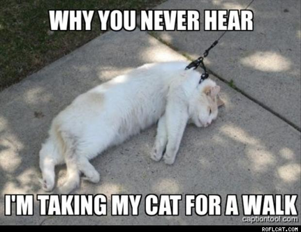 funny pictures, taking the cats for a walk