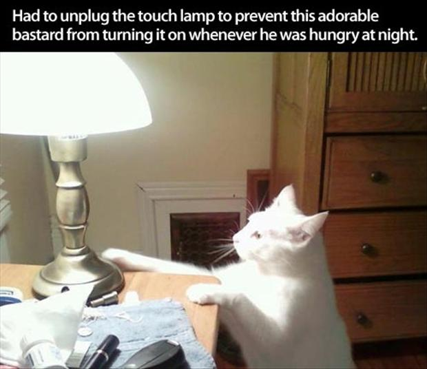 funny pictures, touch lamp and the cat