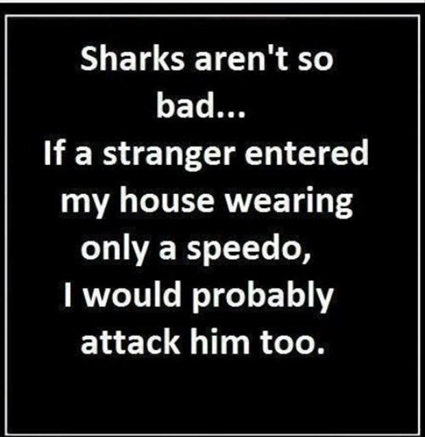funny quotes about sharks