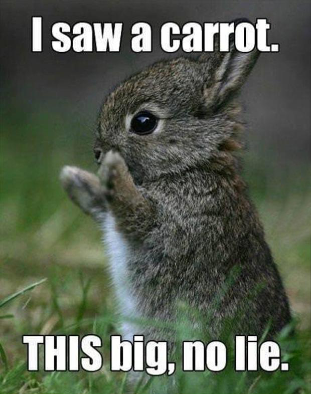 Funny Rabbit Pictures 28