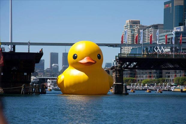funny rubber duck