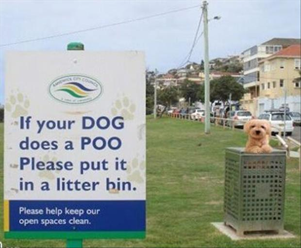 funny signs, dogs