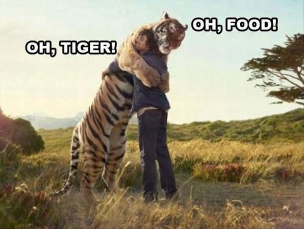 funny tiger pictures