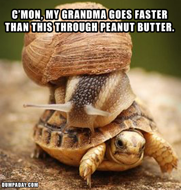 funny turltes, going slow