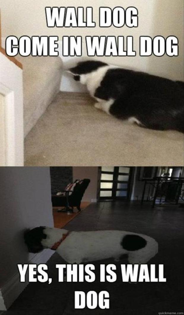 funny wall dog and cat