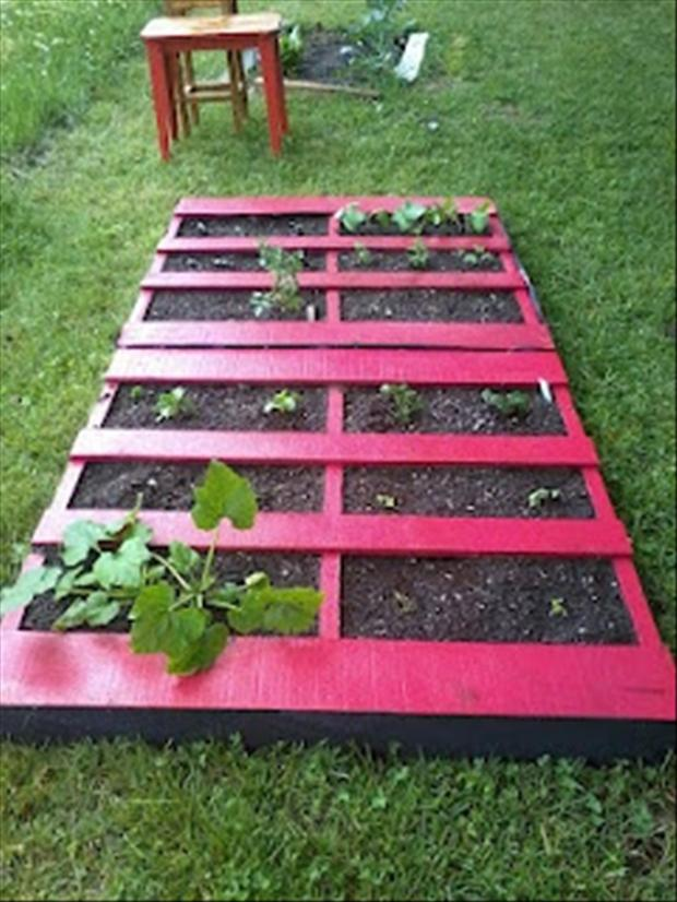 garden from old pallets