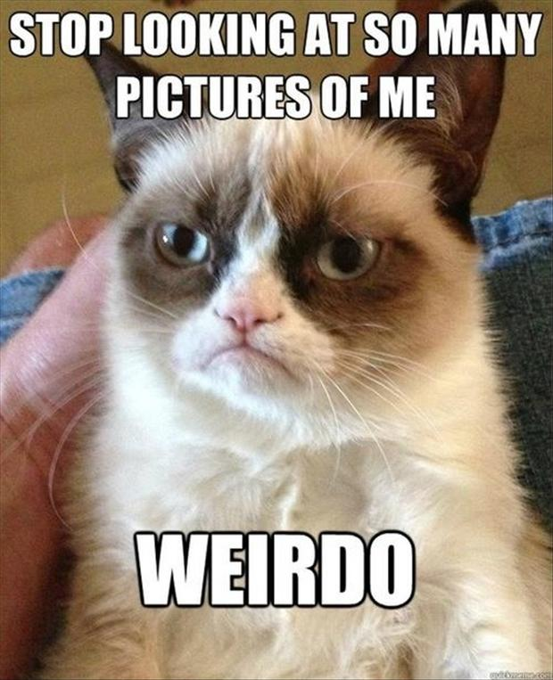 grumpy cat, funny pictures