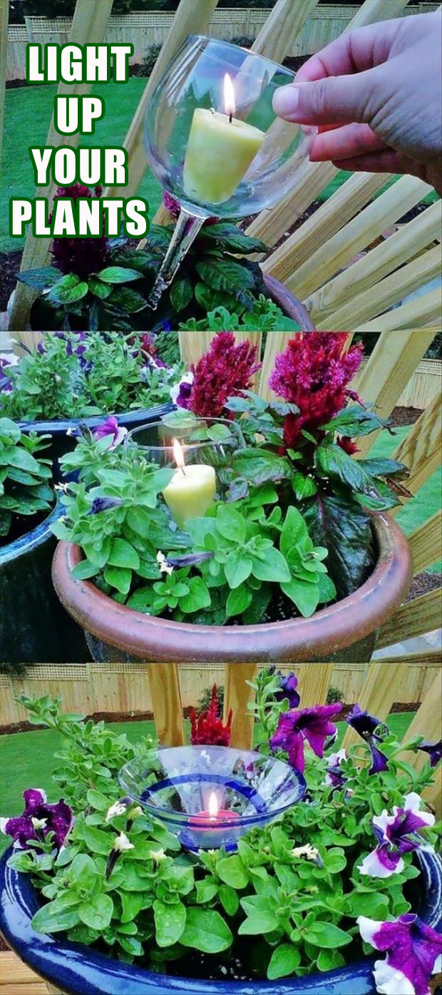 how to light up your plants