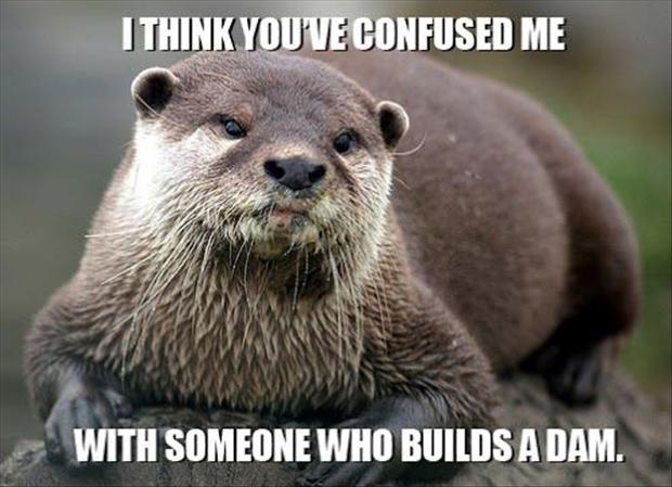 i think you are confused funny animal pictures
