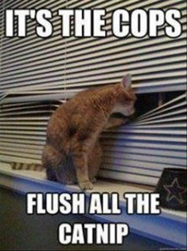 its the cops, flush the drugs, funny cats