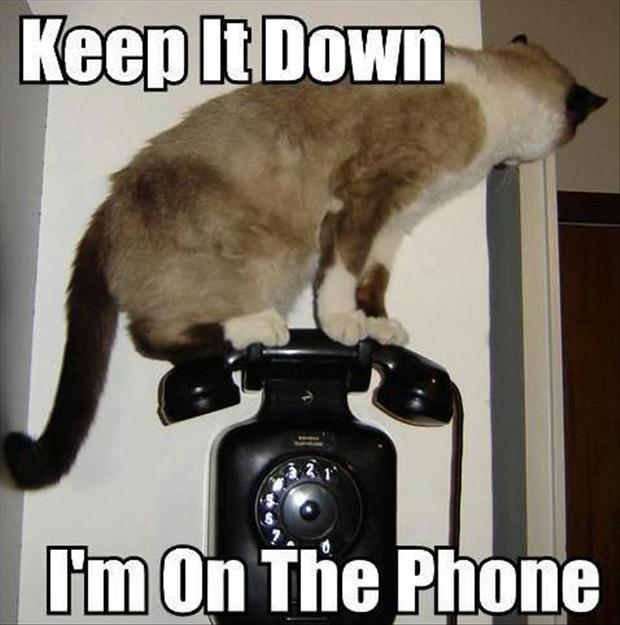 keep it down i'm on the phone
