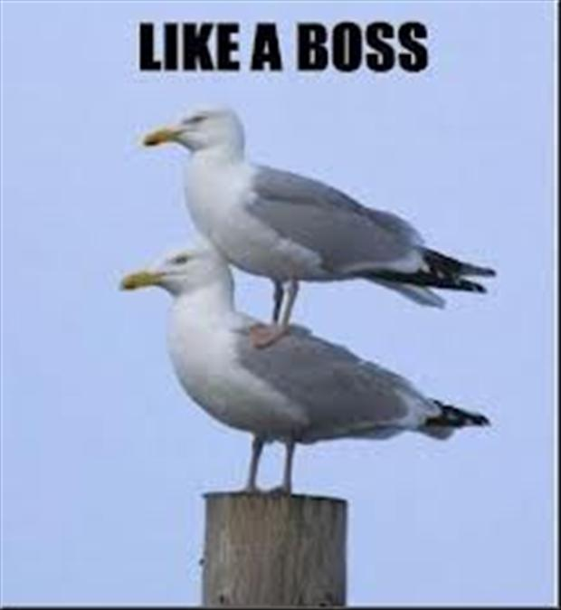like a boss, birds