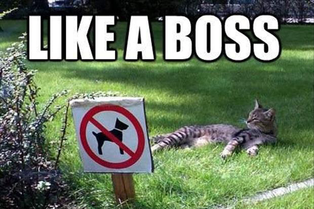 like a boss, cat no dogs