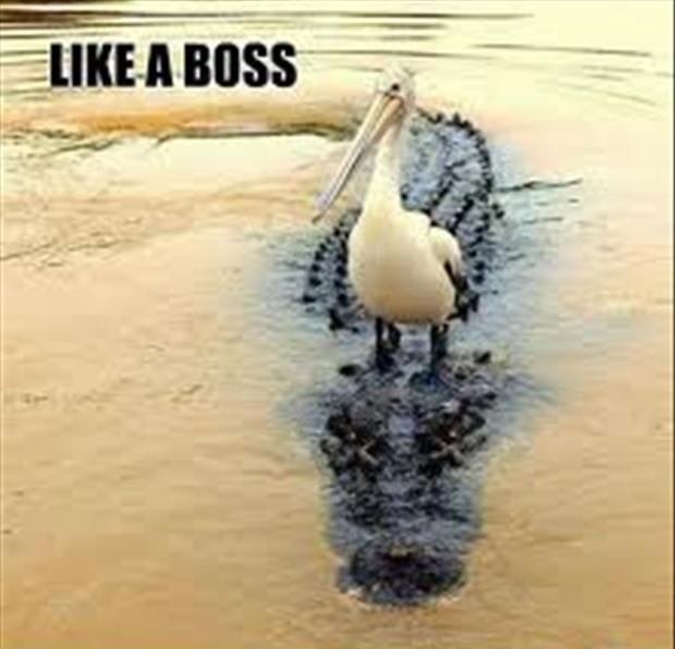 like a boss, funny animals