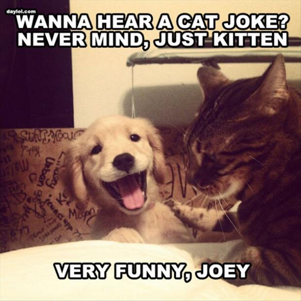 one liner cat jokes