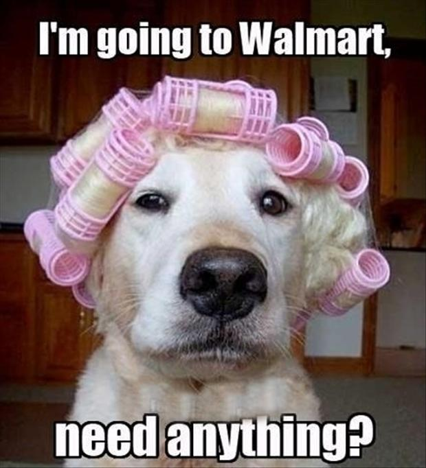 people of wal mart, dogs