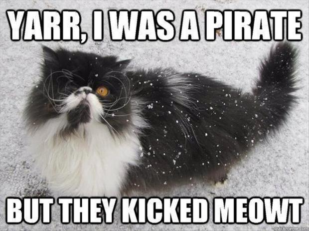 pirate cat, funny pictures