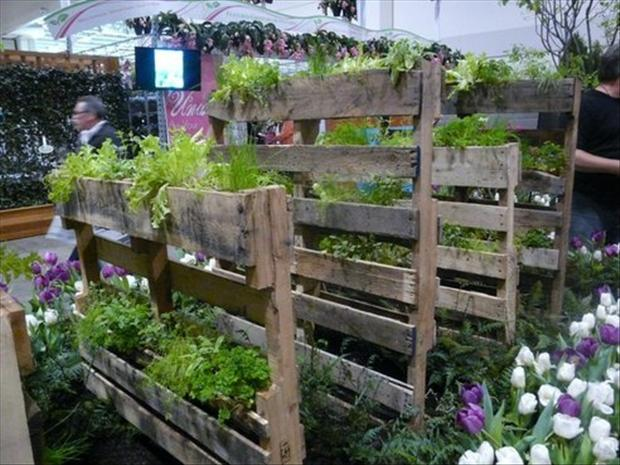 reuse old pallets, plants