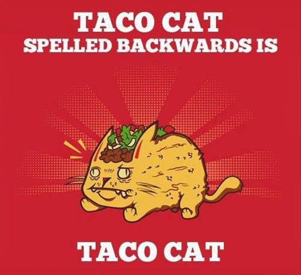 taco cat, funny pictures