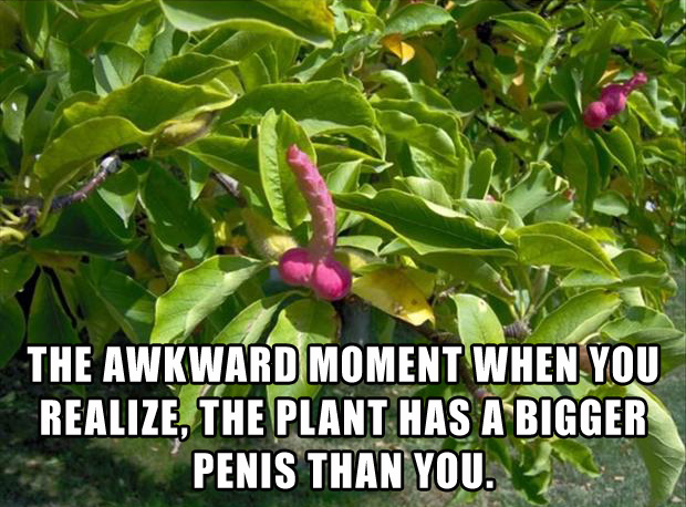 the awkward moment when your plant has a bigger penis than you