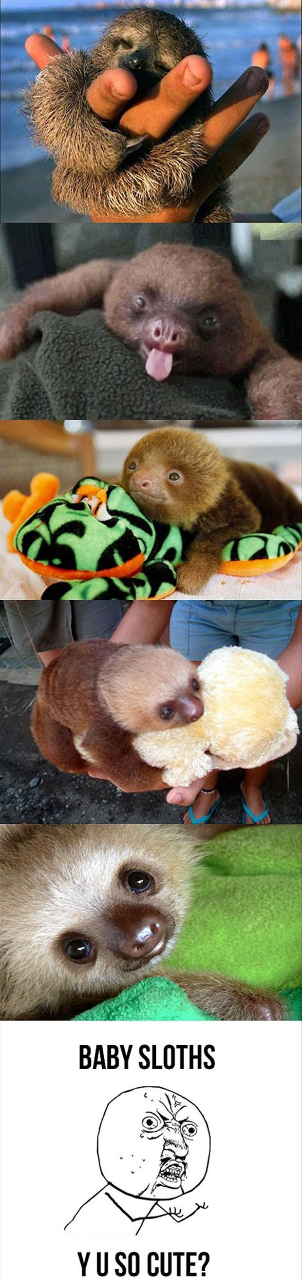 the baby sloths, funny meme
