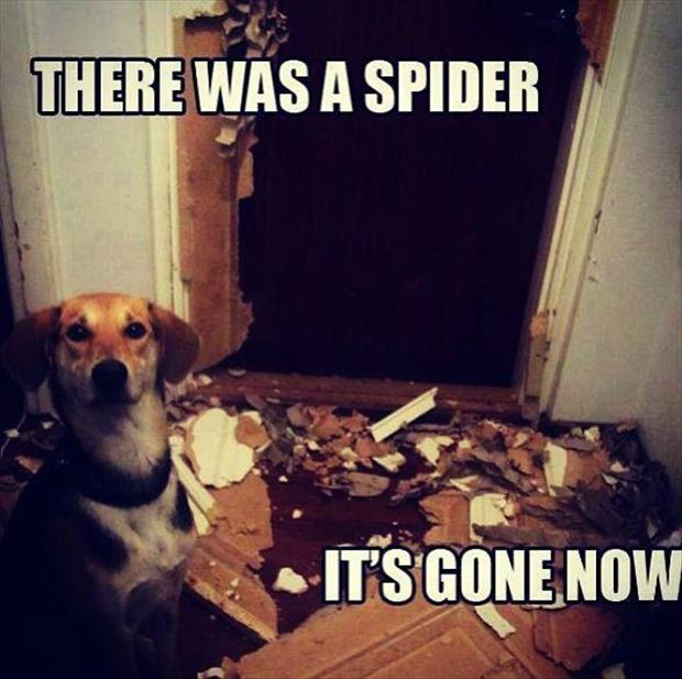 there was a spider funny pictures