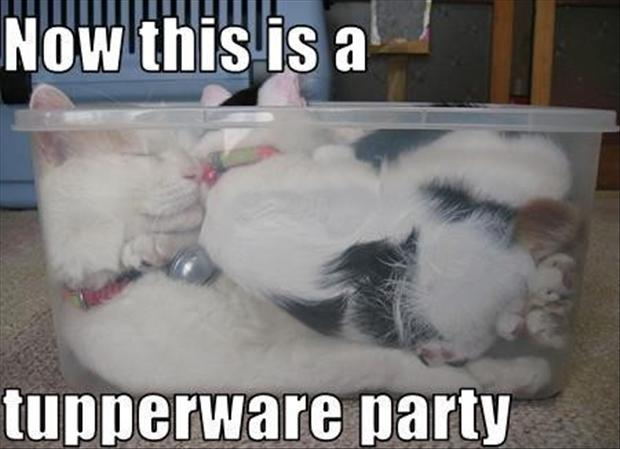 tupper ware party, funny cats
