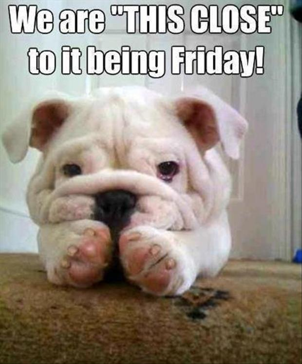 we are this close to it being friday funny dog pictures