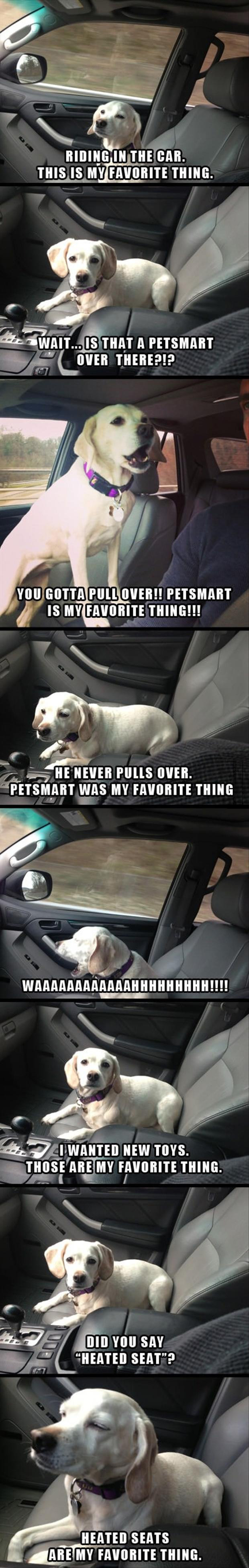z funny pictures, dog in the car
