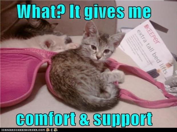 A cat sleeping in a bra