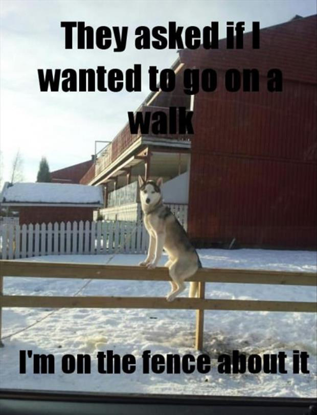 Dog sitting on a fence