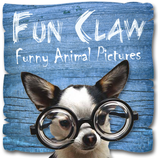 Fun Claw Facebook Profile Picture