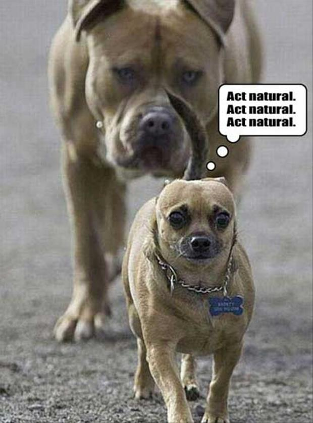 Funny Animal Overload 55 Pics