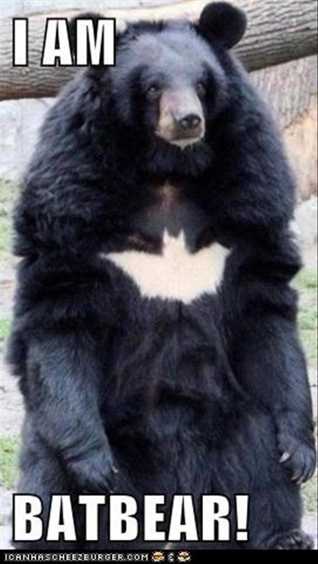 Funny Animals-batbear